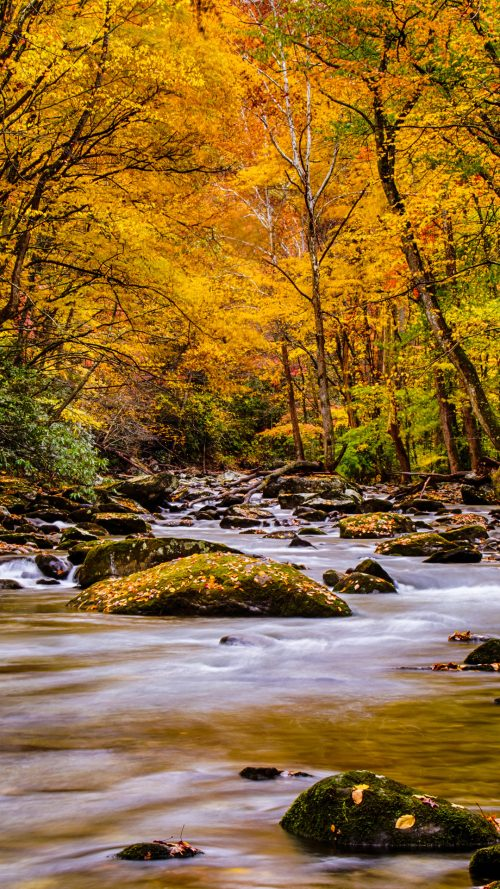 Wallpaper For Phones Fall Nature Picture Of Autumn Forest In The Great Smoky