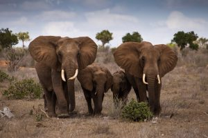 20 High Resolution Elephant Pictures No 10 - Family of Elephant