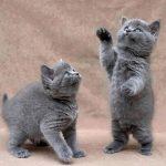Best Cute Kitten Wallpaper No 10