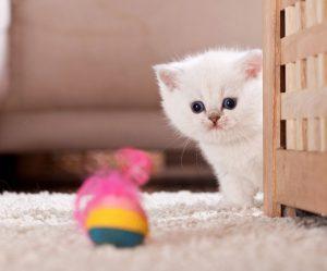Best Cute Kitten Wallpaper No 8