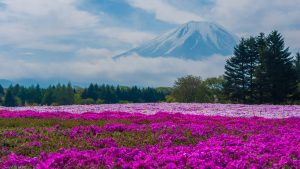 Nature Images HD with Mount Fuji Japan