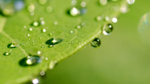 Attachment picture for high quality nature pictures with macro photo of wet leaves