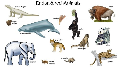 Extinct Animals Names Hindi
