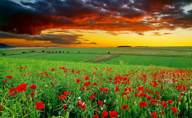 Full Hd Nature Wallpapers 1080p Desktop In Green Landscape With Flowers Hd Wallpapers