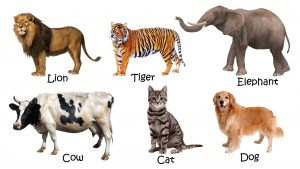 Picture of Domestic animals with names