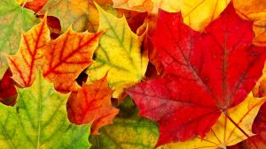 1080p HD Nature Wallpapers with colorful Maples Leaves Background