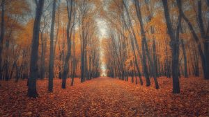 Beautiful Nature Wallpaper Big Size #17 with Autumn Forest Picture in 4K