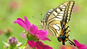 Picture of Butterfly on Flower in HD Resolution