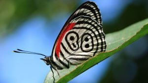 HD Nature Images with Macro Photo of Butterfly