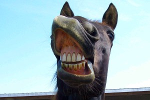 Equine Dental Cleaning
