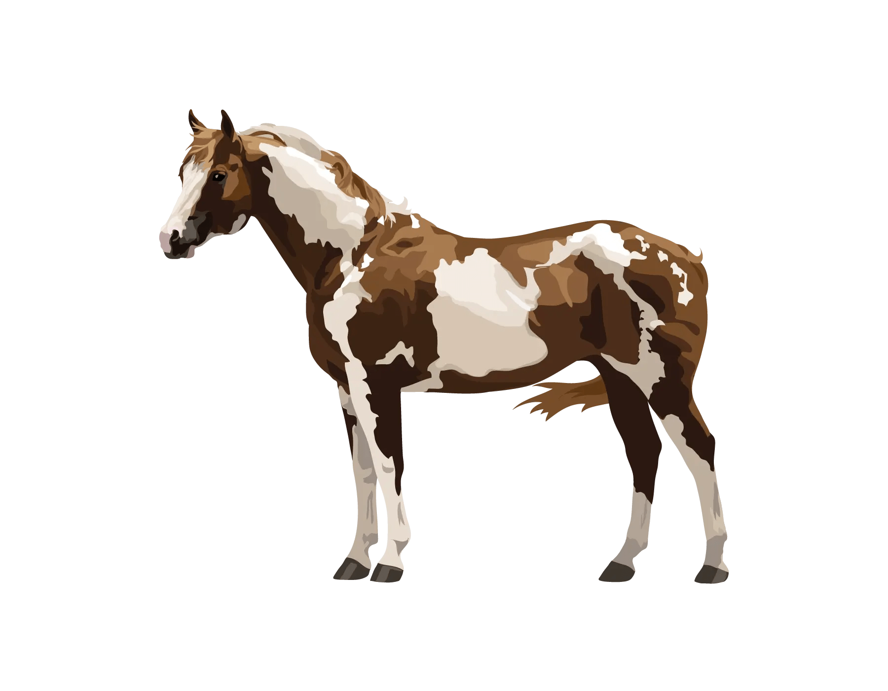 Paint or Pinto Horse
