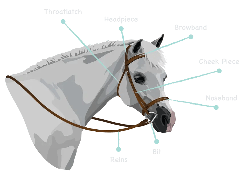 photo about Grooming Tools for Horses Printable Worksheet named Bridle Components Models
