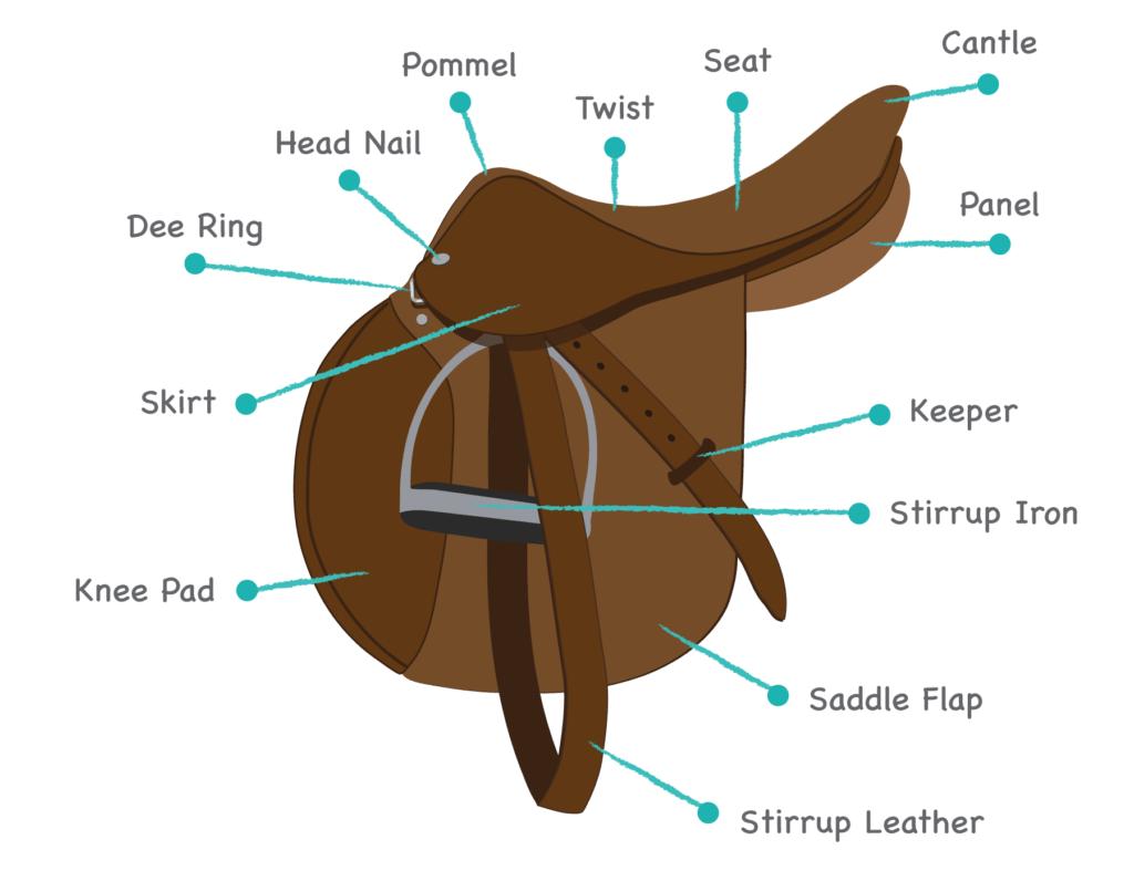 diagram parts of a horse 3 pin flasher relay wiring manual identify saddle types play the name
