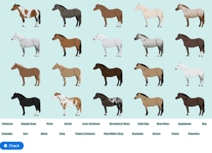 Horse Colors Match Game