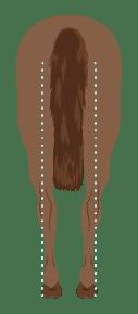 Horse Hind Leg Conformation Narrow