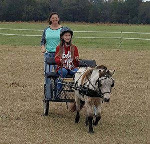Amy Resch Barker horse pony carriage driving instructor
