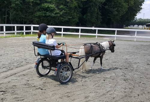 Amy Resch Barker horse pony carriage driving instructor students
