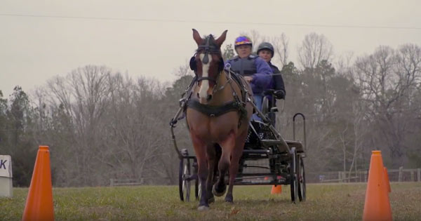 Allpony interview combined driving horse susan gloria