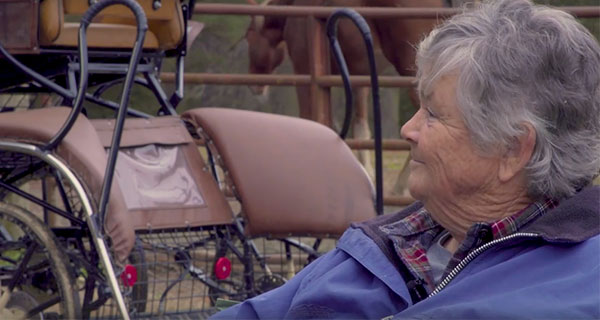 Allpony interview combined driving horse instructor gloria