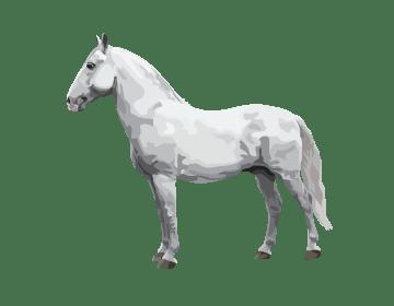 Lipizzan horse illustration