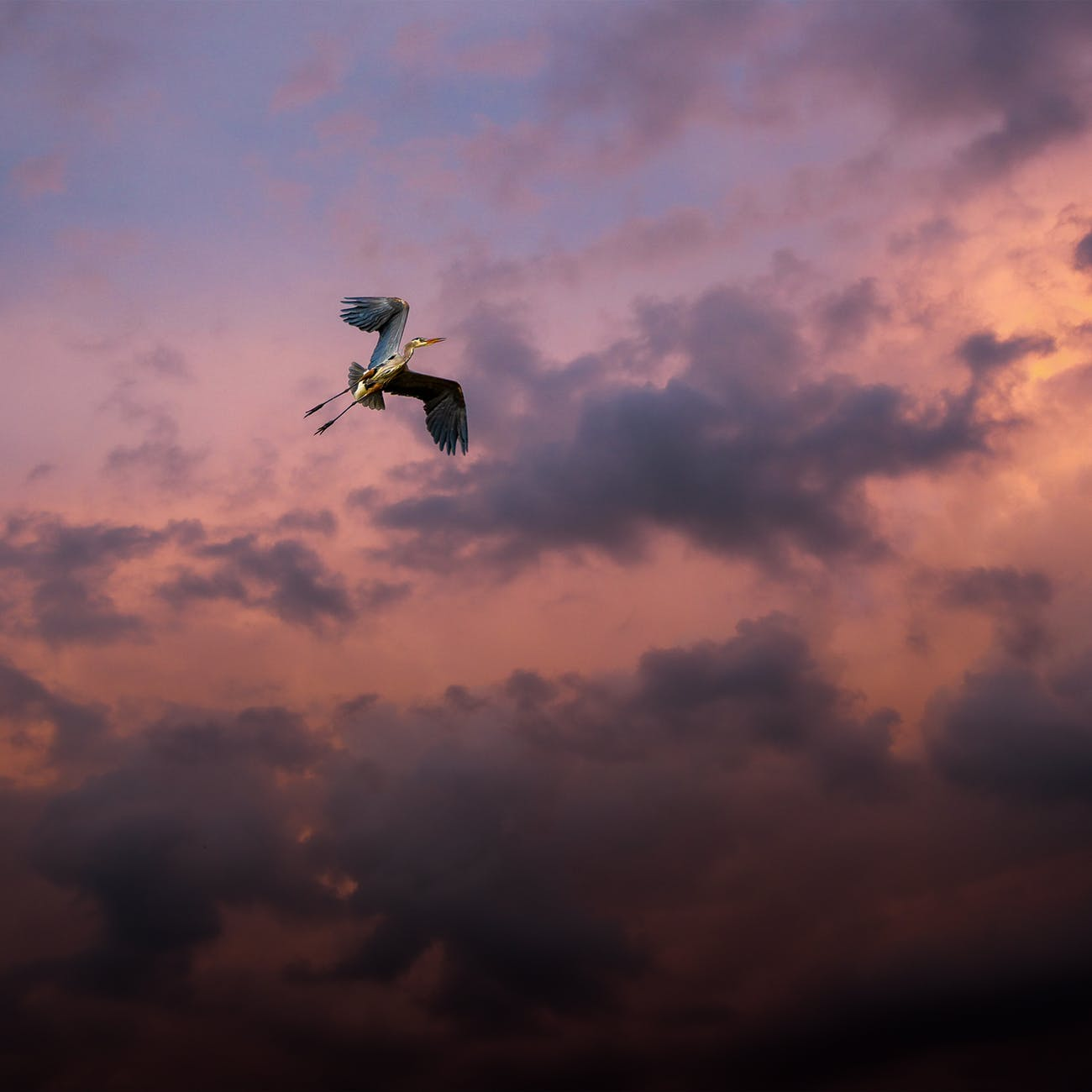 bird flying under cloudy sky