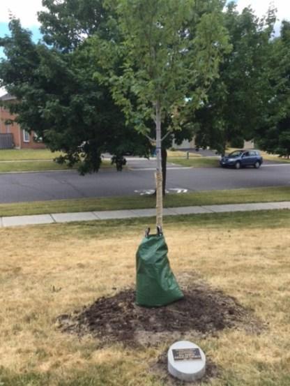 2016, July 9, All Saints' Tree