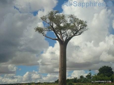 toliara-to-ilakaka-baobab-trees-003