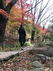 forest walk along small creek