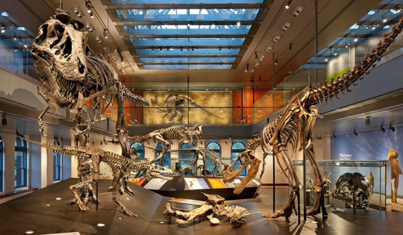 dinosaur skeleton exhibit at natural history museum in los angeles