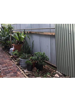 Narrabeen Garden Before