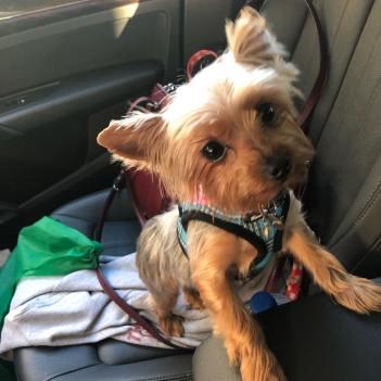 Sonya pet dog, Ms. Sunny