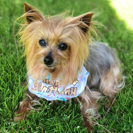 Aimee Beloved Dog