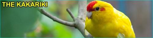 Kakariki species