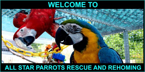 2 macaws on the All Star Parrots banner picture