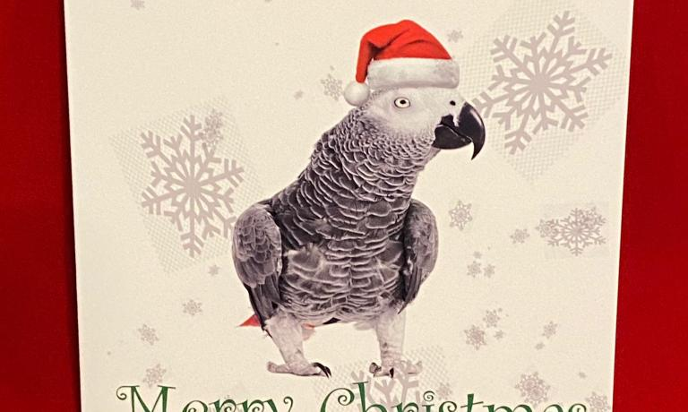10 African Grey Christmas cards