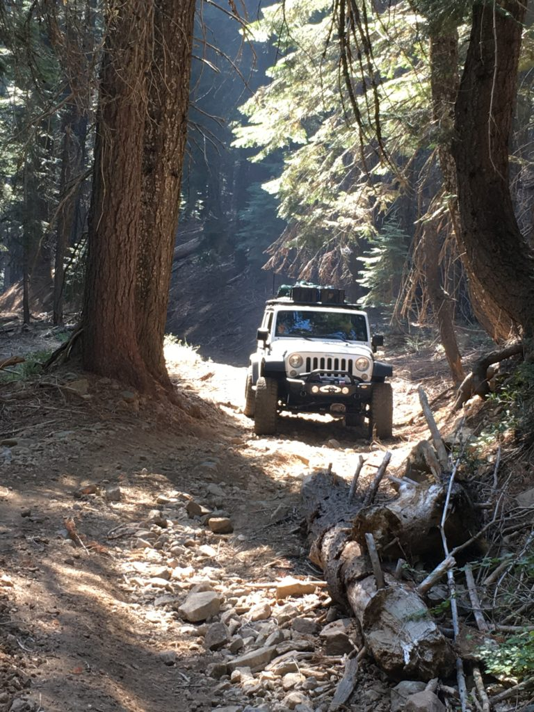 Jeep JK through the trees on the Plumas Backcountry Discovery Trail