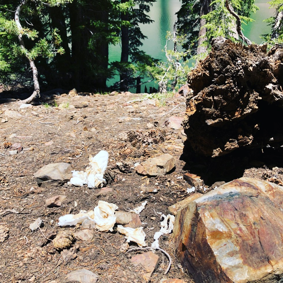 Toilet paper and human feces at Crater Lake, CA