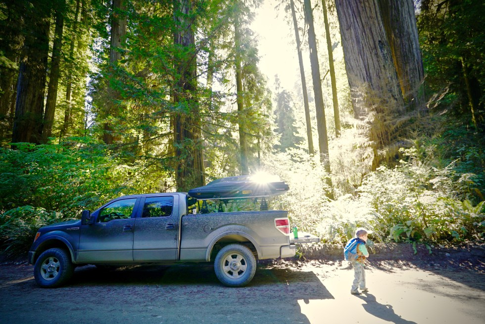Boy Scout Tree Trail Jedediah Smith Redwoods State Park