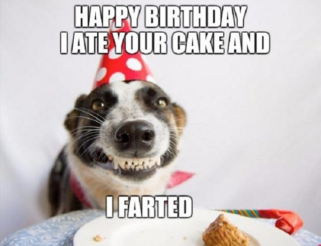 happy birthday wishes for best friend dog