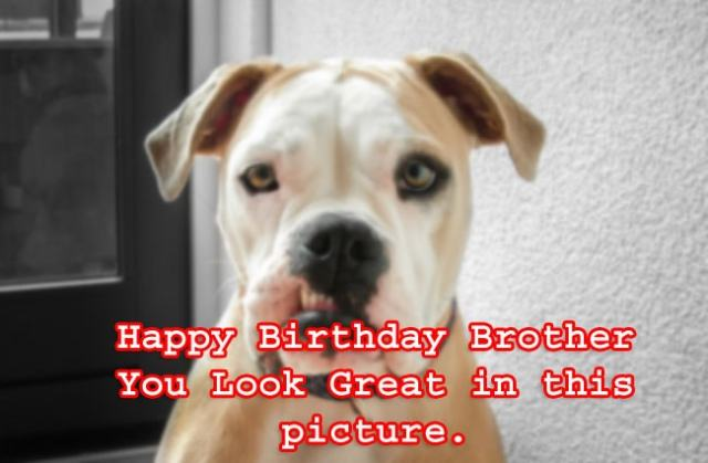 you look great brother birthday dog meme