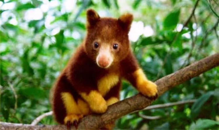 the 7 cutest animals