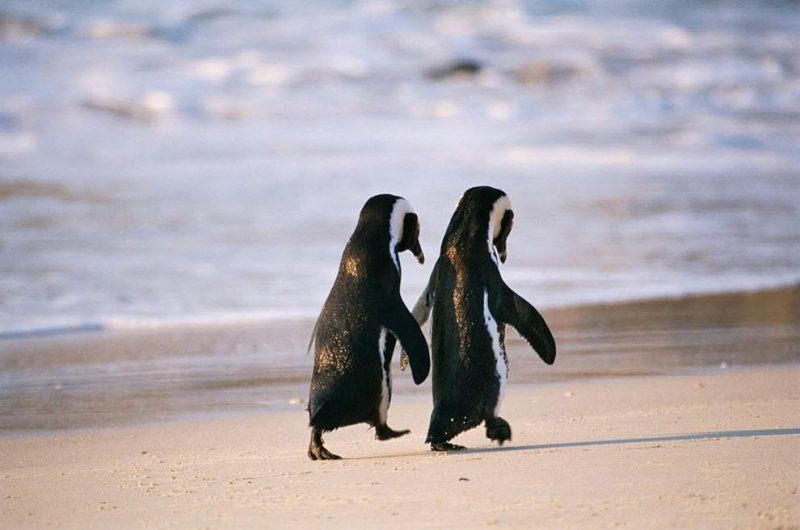 Cute Silly Wallpaper 20 Animals On The Beach Who Love Summer More Than You