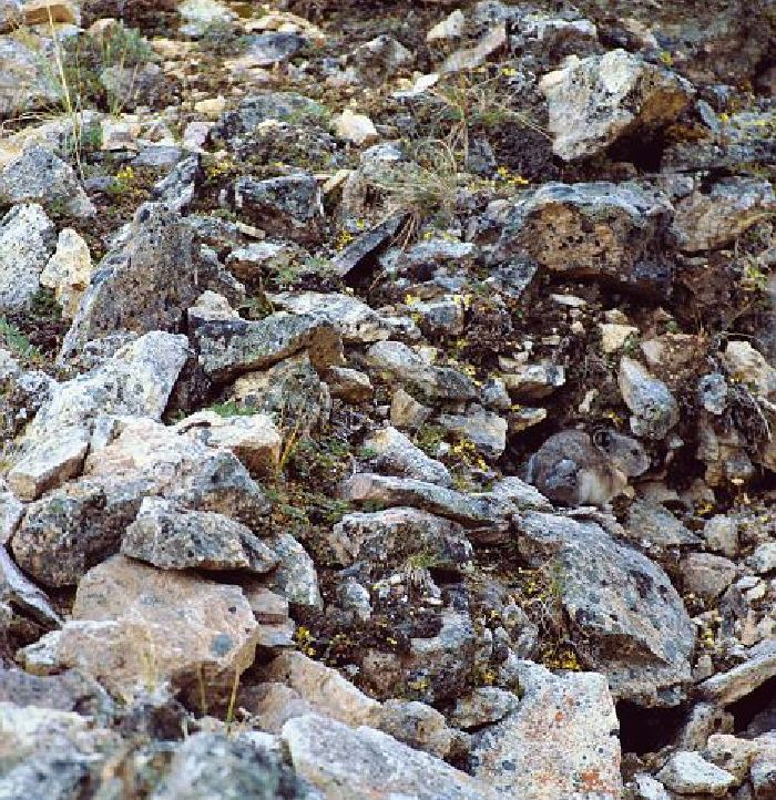 27 animal camouflage pictures