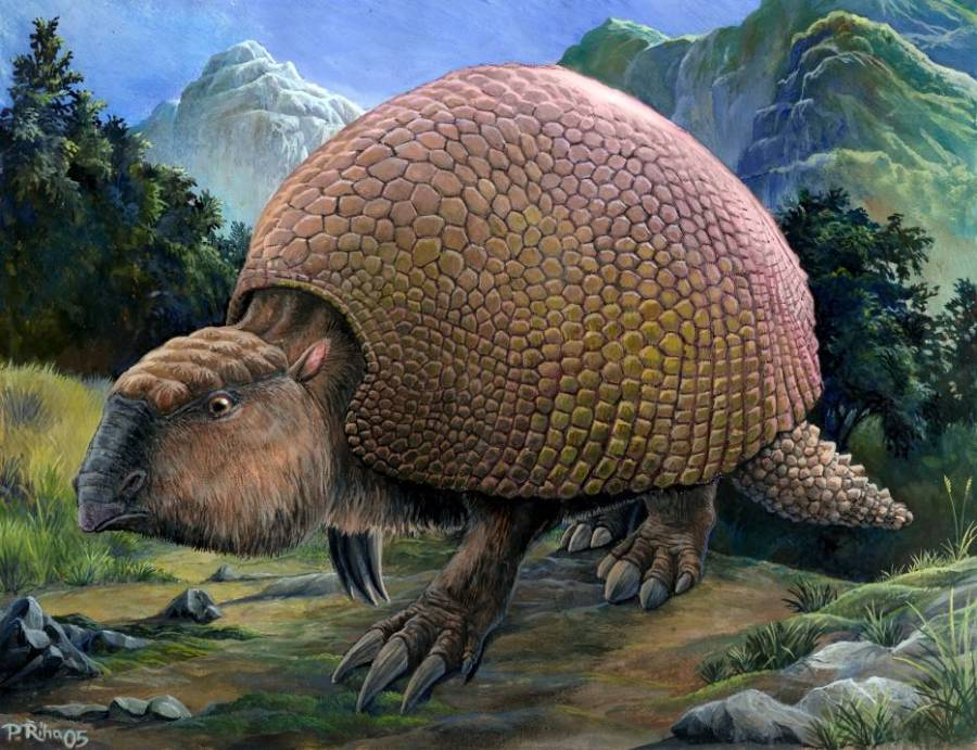 glyptodon the prehistoric armadillo