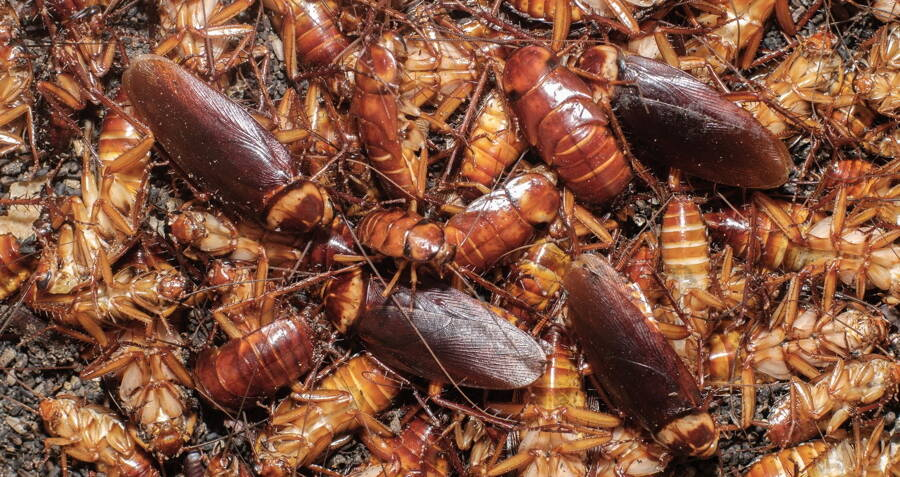 Image result for Cockroaches
