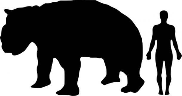 Comparing Diprotodon To Human
