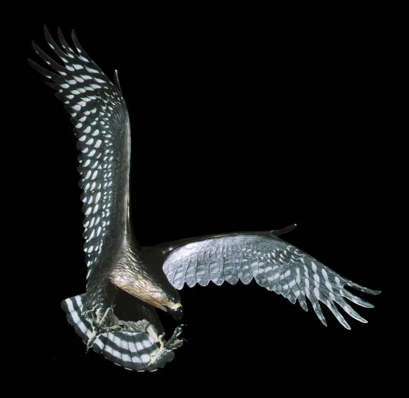 Haast Eagle Museum Figure