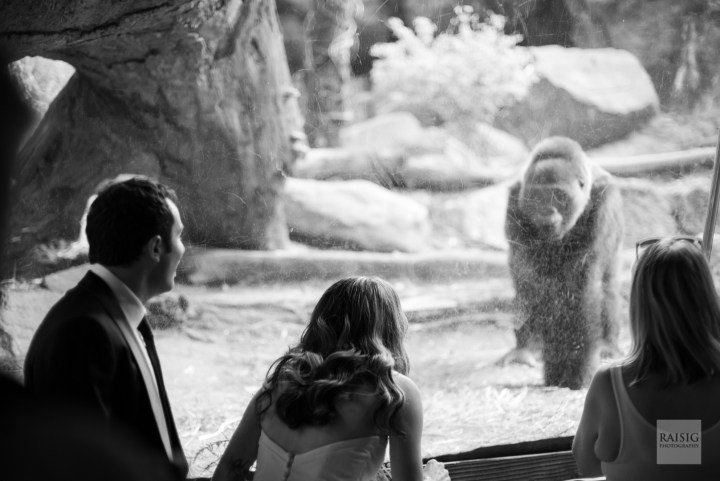 Wedding at the Wildlife Conservation Society Congo Exhibit