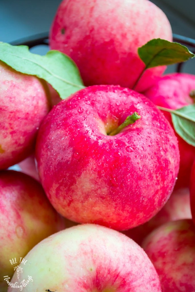70+ Real Food Apple Recipes (sweet & savory, all gluten-free & nourishing!)