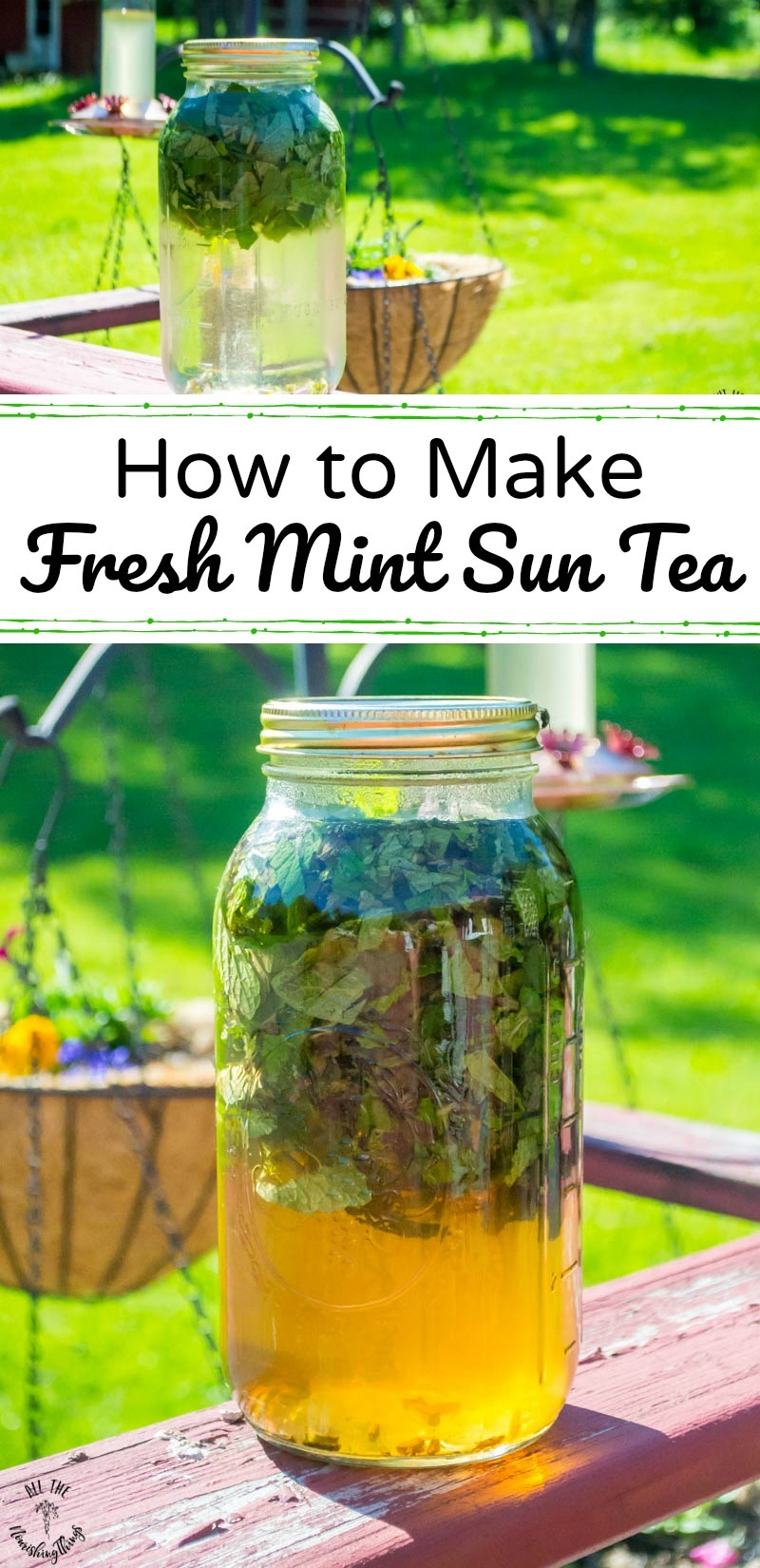collage of 2 images of fresh mint sun tea with text overlay